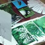 Детский эколого-биологический центр поучаствовал в проведении «Ночи музеев»