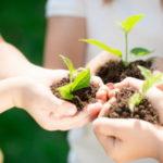 В Детском эколого-биологическом центре пройдёт фестиваль для молодых защитников природы