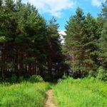 Итоги областного юниорского лесного конкурса «Подрост»