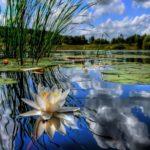 Приглашаем к участию в областном конкурсе «Зеркало природы»