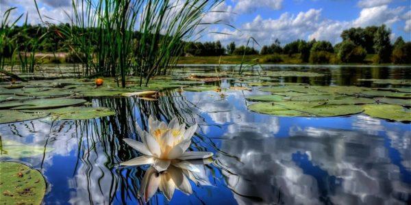Продолжается приём заявок на областной фестиваль «Зеркало природы»