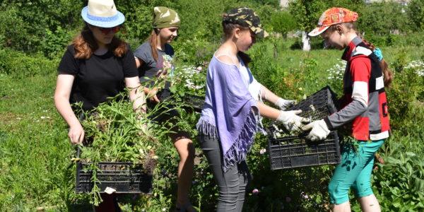 Лагерь труда и отдыха в Детском эколого-биологическом центре