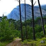 В объединении «Заповедники России — бесценное наследие» прошла видеоэкскурсия в Ялтинский горно-лесной заповедник