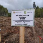 Сотрудники нашего Центра приняли участие во Всероссийским проекте «Сохраним лес»