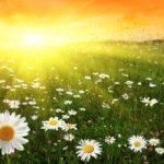 В Детском эколого–биологическом центре подвели итоги областного Смотра-конкурса ландшафтных проектов «Цвети, Рязанская земля!»