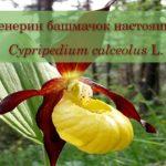 Рубрика «Природа Рязанской области»