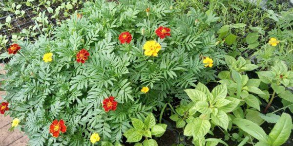 Детский эколого-биологический центр реализует рассаду цветочных и декоративно-кустарниковых растений