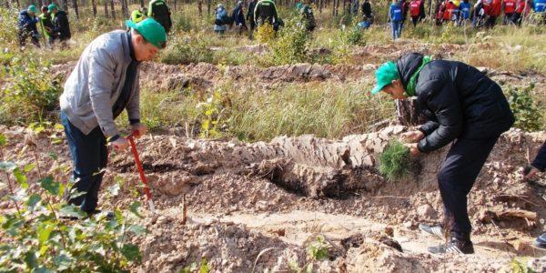 Подведены итоги регионального этапа Всероссийского конкурса экологических проектов «Волонтеры могут всё»