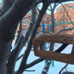 Обучающиеся «Экосферы» приняли участие в акции «Покормите птиц зимой»