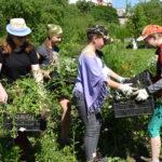 Информация о реализации проекта «Трудовое лето»