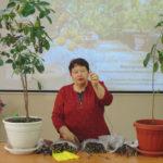 Омолаживание плодового сада
