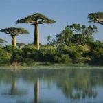 Интересные факты из мира природы: Баобаб