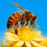 Приглашаем принять участие в областном конкурсе детского рисунка «Удивительным мир пчел или как спасти планету от их исчезновения»