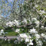 Приглашаем принять участие в акции «Цвети наш сад»